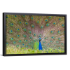 Peacock Fanning | Single Rectangle Canvas