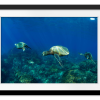 Pacific Ocean Turtles | Rectangle print with mat