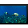 Pacific Ocean Turtles | Rectangle Print