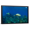 Pacific Ocean Turtles | Single Rectangle Canvas