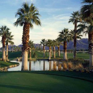 Palm Trees in Golf Course