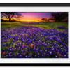 Rectangle print with mat | Bluebonnets At Dusk II