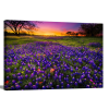 1.5 inch gallery wrap | Bluebonnets At Dusk II