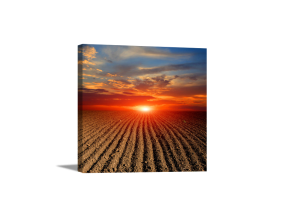 Sunset Over Field Canvas
