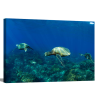 Pacific Ocean Turtles | 1.5 inch gallery wrap